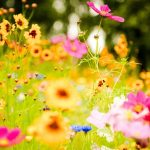 flowers-plants-images-and-wallpapers-30