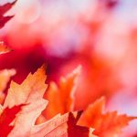 red_foliage_fall-wallpaper-1600×480