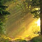 sunny_morning_forest_path-wallpaper-1600×900