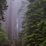 redwood_national_park_california-wallpaper-720×1280
