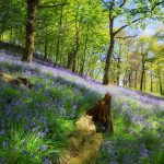 woodland_spring_flowers-wallpaper-1280×720